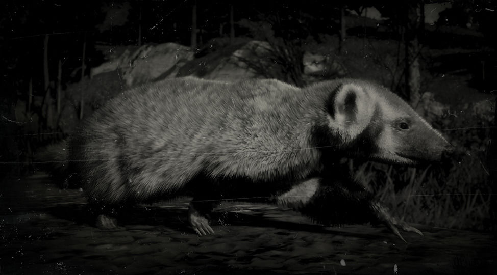 RDR2 American Badger