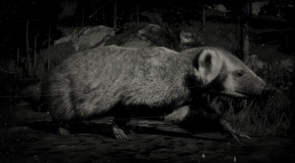 RDR2 American Badger