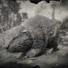 RDR2 North American Beaver