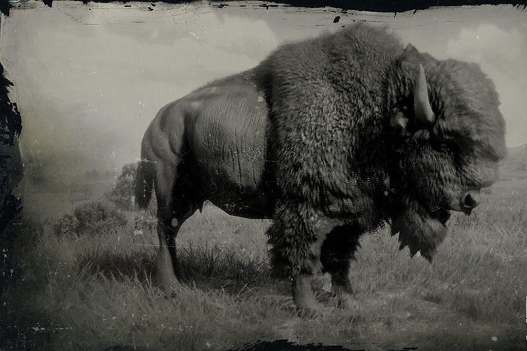 RDR2 American Bison