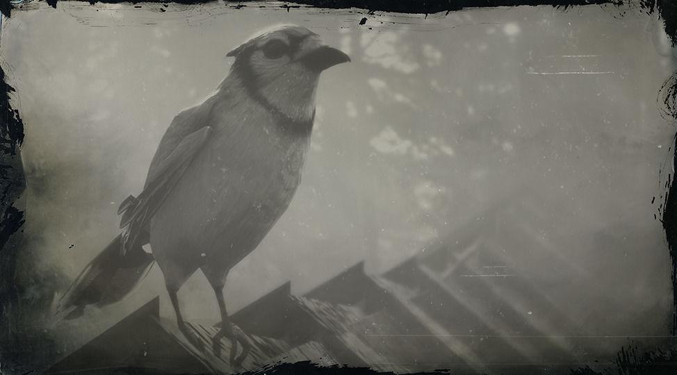 RDR2 Blue Jay