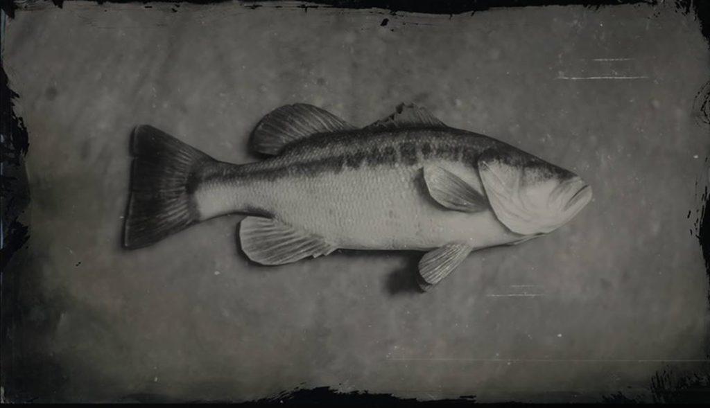 RDR2 Largemouth Bass