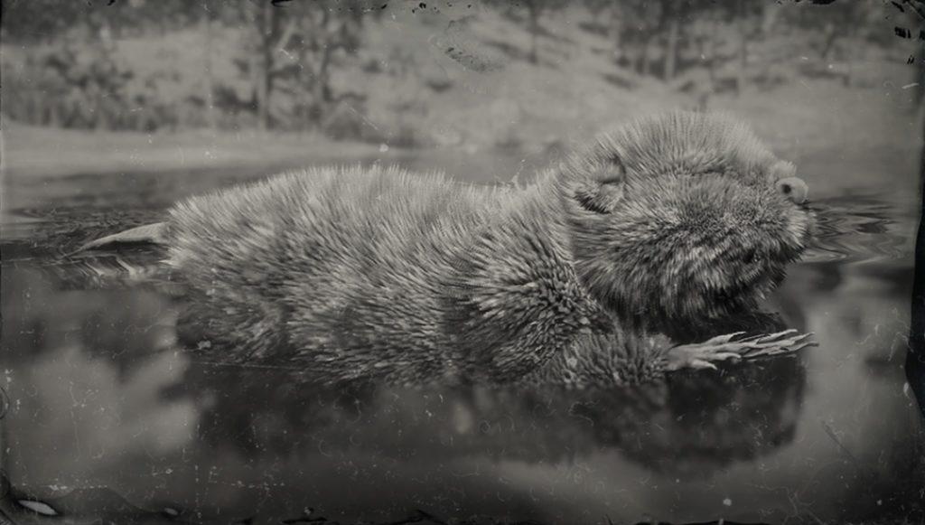 RDR2 Legendary Beaver
