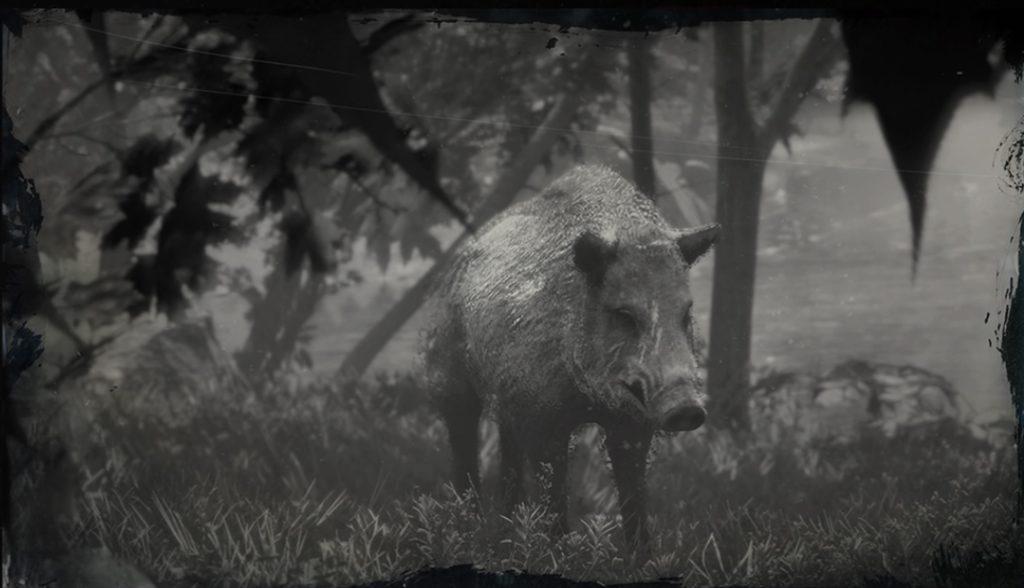 RDR2 Legendary Boar