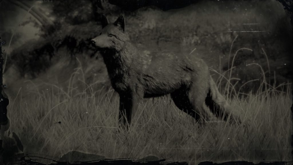 RDR2 Legendary Coyote
