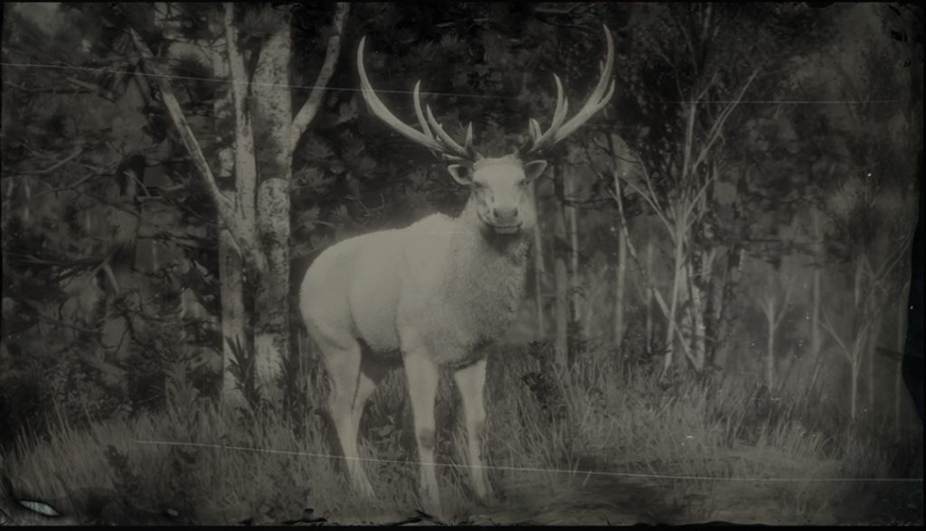 Legendary Elk Hunting & Skin Location   Red Dead Redemption