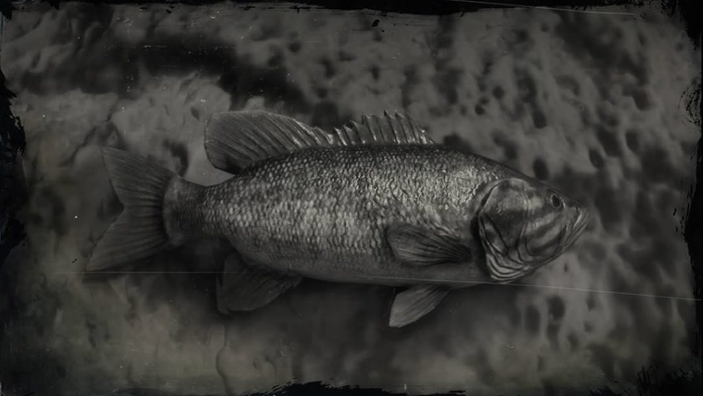 RDR2 Smallmouth Bass