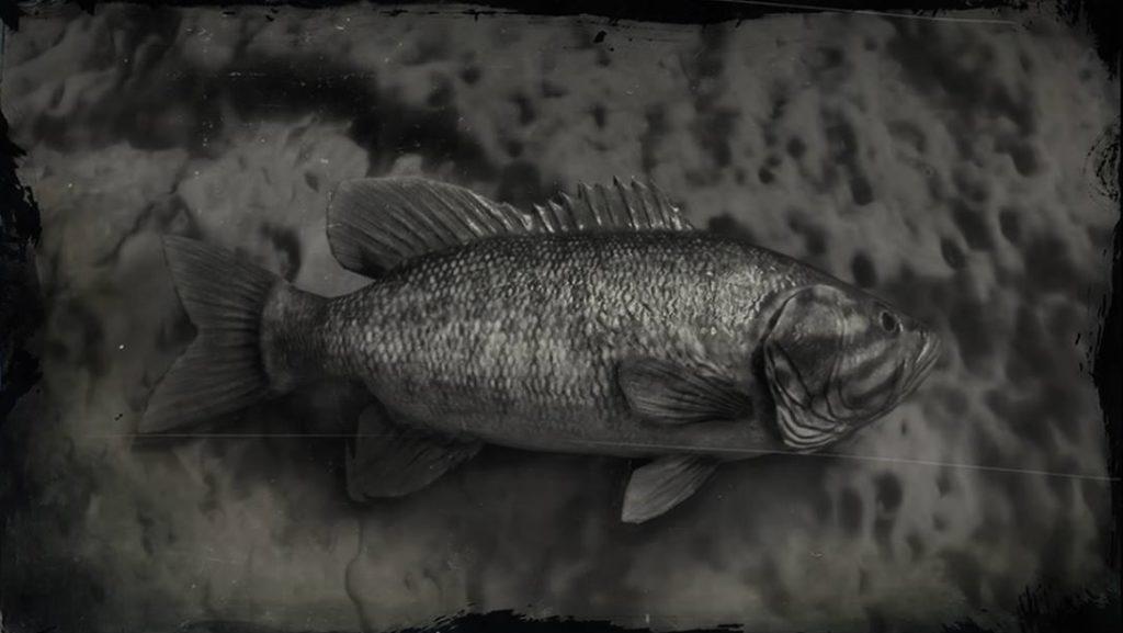 RDR2 Smallmouth Bass