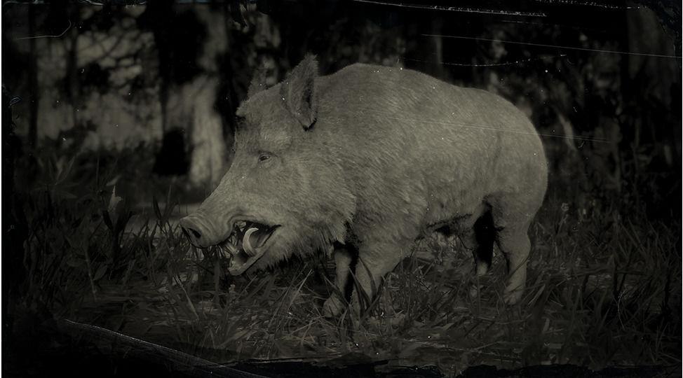 RDR2 Wild Boar